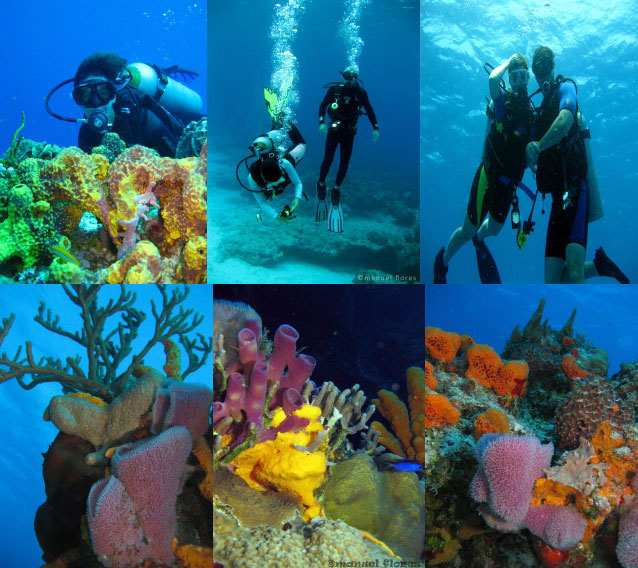 Dive cozumel go tour cozumel - Dive shop mexico ...
